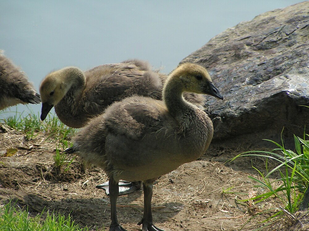 Duck Duck Goose by kraftyest