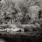 Salisbury River, SW Tasmania 1 by Andrew Smyth