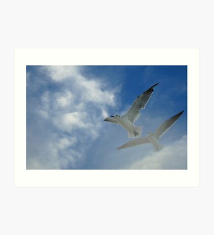 Gliding in the wind Art Print