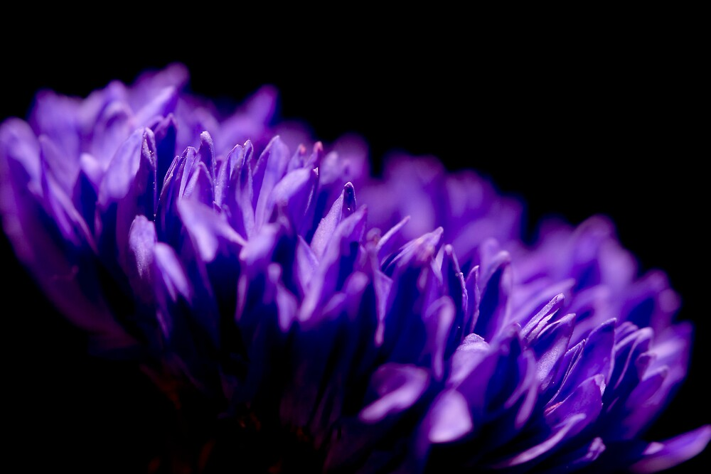 Purple Flower by Chris Goor