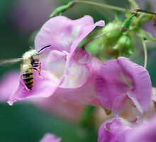 Busy Bee by Thelonius