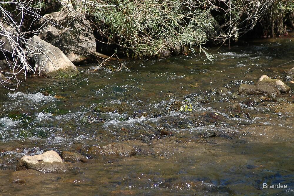 Ogden River 2 by Brandee