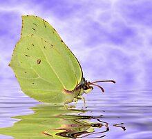 Butterfly in water by Annika Strömgren