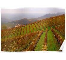 Vineyards of Barolo  Poster