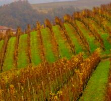Vineyards of Barolo  Sticker