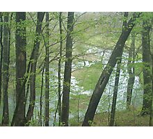 some creek in Tennessee  Photographic Print
