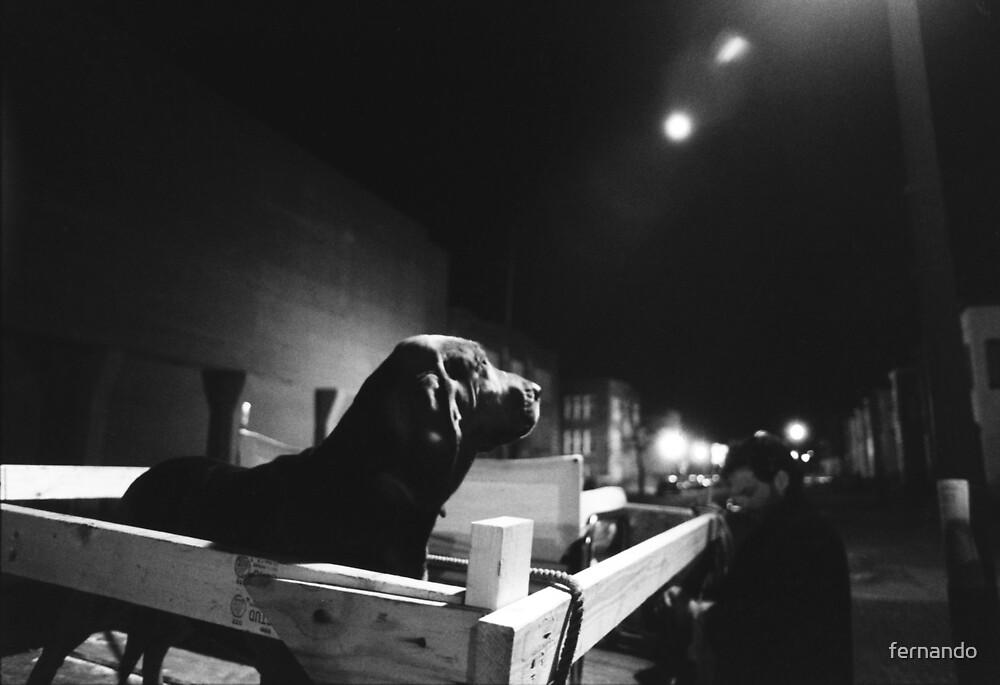 Bloodhound by fernando
