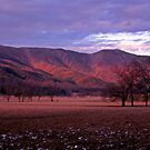 In The Winter Light by Rodney Lee Williams