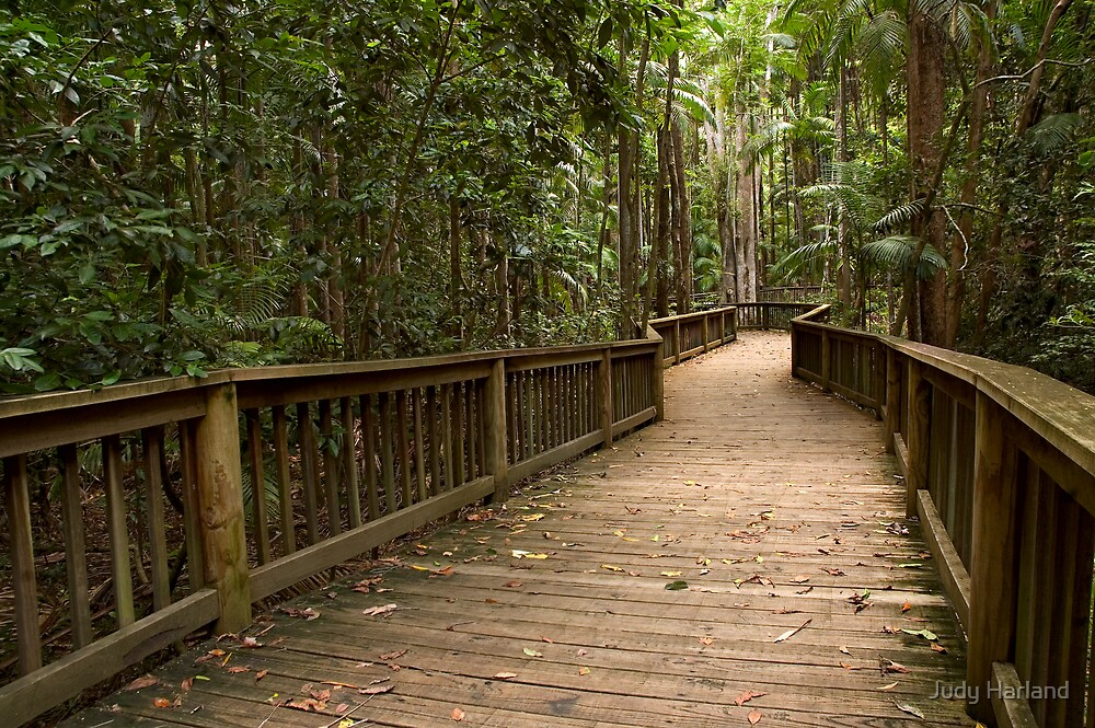 Buderim Forest Park by J Harland