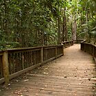 Buderim Forest Park by Judy Harland