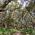 trees by wanda blake