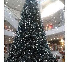 Snowy Christmas Tree by Joe Bolingbroke