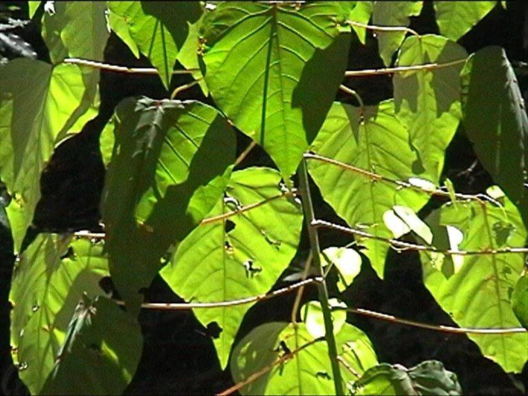 Leaves by siskos