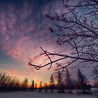 Winter Sky 612513 by Ian McGregor