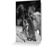 One Lonely Penguin Greeting Card