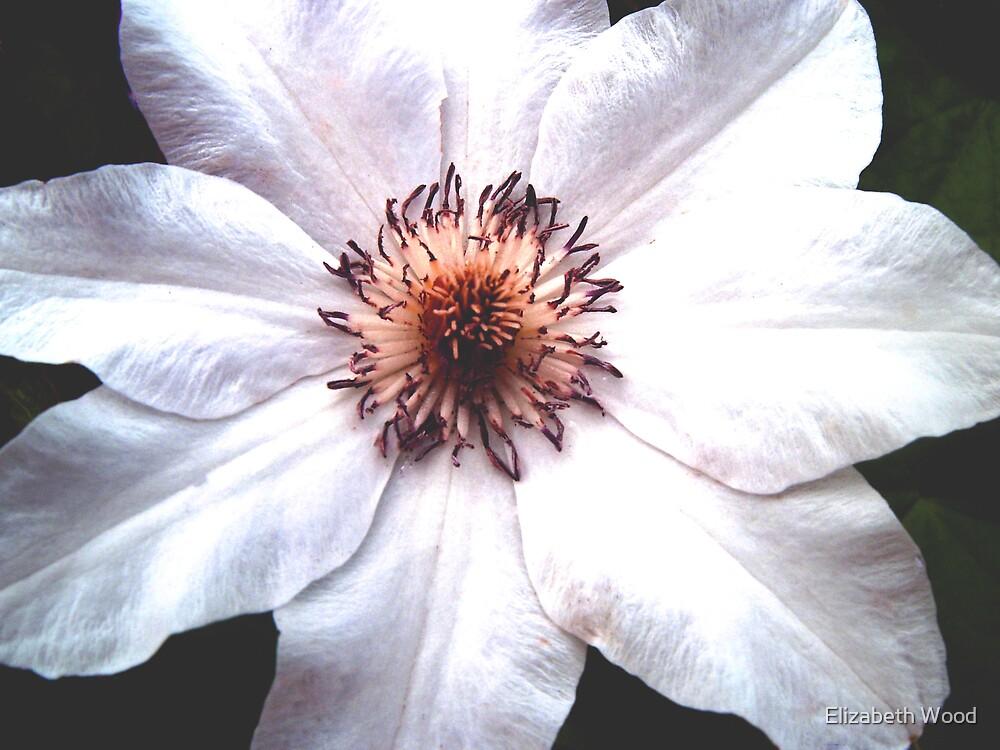 Bright Flower pretty beautiful by Elizabeth Wood