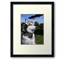 Proud Pup Framed Print