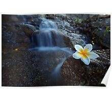 Flower on watterfall  Poster