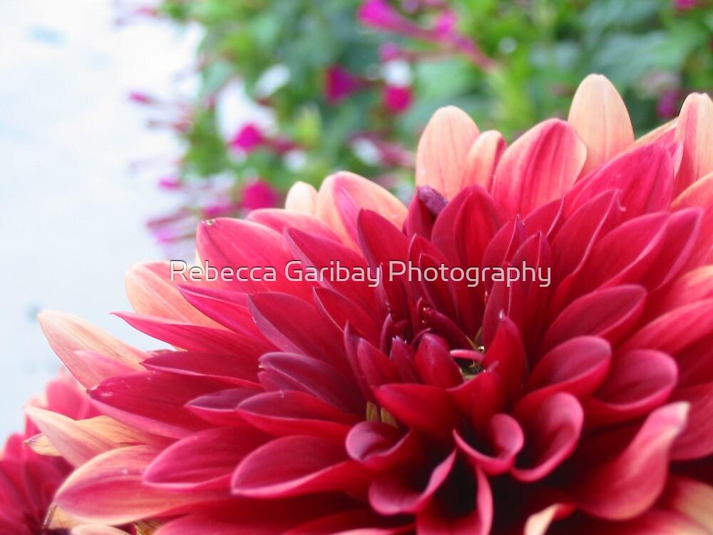flower by Rebecca Garibay Photography