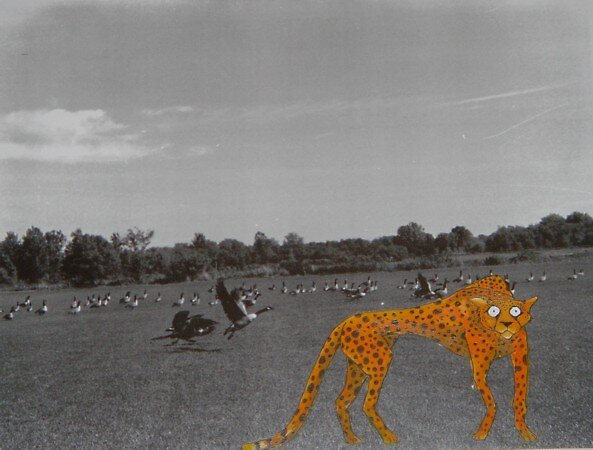 Cheetahs Can't fly by Chad  Schuety