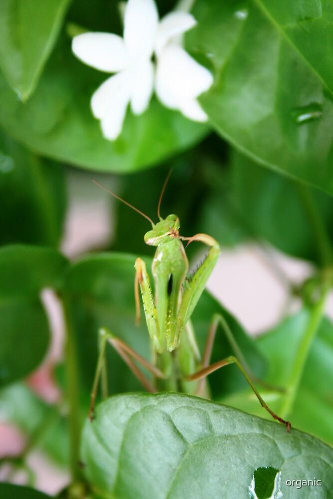 New Garden Guest by organic