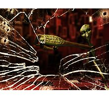 Alien looks through shattered glass Photographic Print