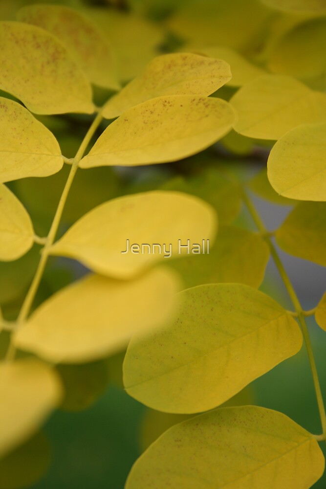 Yellow by Jenny Hall