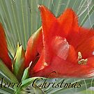 A Merry Merry Christmas...........tropically speaking by Brenda Dow