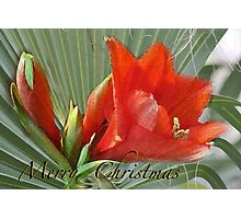 A Merry Merry Christmas...........tropically speaking Photographic Print