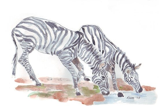 Zebras colour sketch by Maree  Clarkson