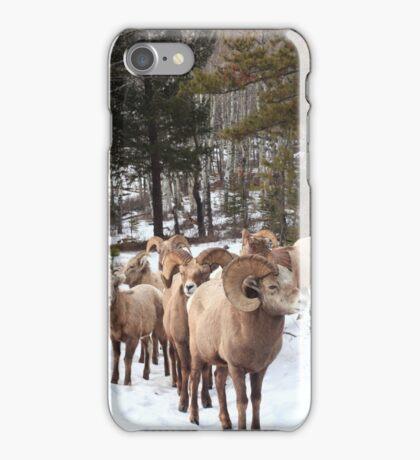 Meeting Bighorn sheep II  iPhone Case/Skin