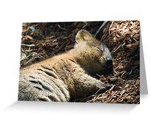 Quokka Dreaming Greeting Card