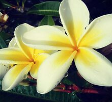 Frangipani by smushes