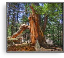 A Once Mighty Tree Canvas Print