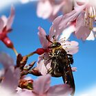 Bee On Cherry Blossom by Cynthia48