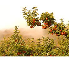 Apples & Fog Photographic Print