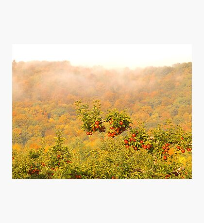 Autumn Apples Photographic Print