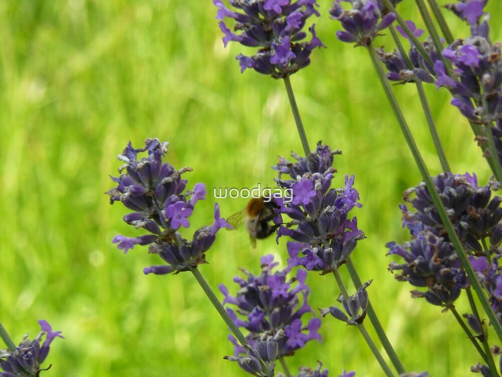 Sweet Taste Of Lavender by woodgag