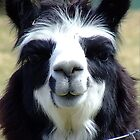 Margret the Famous Smiling Alpaca by thewaterfallhunter