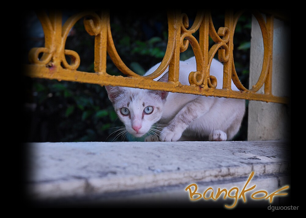 Cat in Bangkok Temple by dgwooster