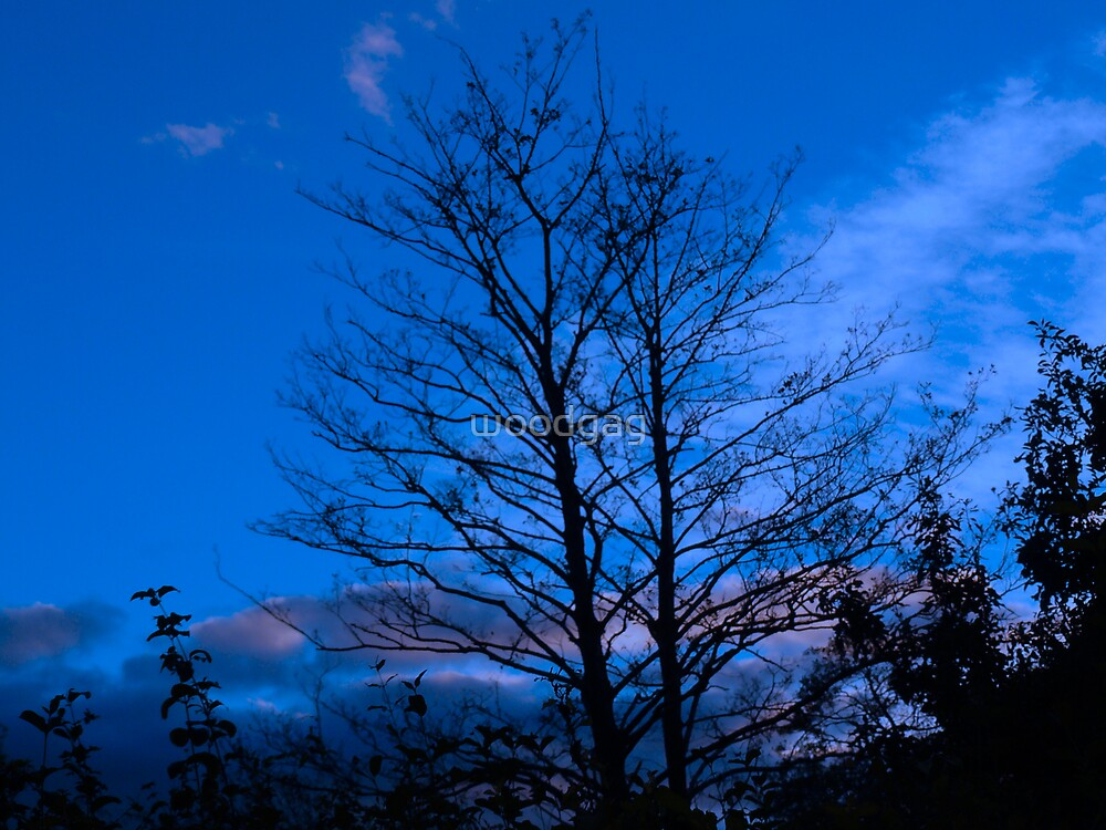 Autum Sky (Blue) by woodgag