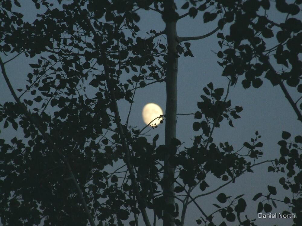 Seattle Moon by Daniel North