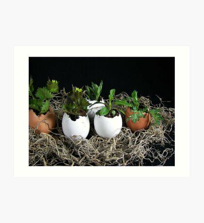 Egg Plant Art Print