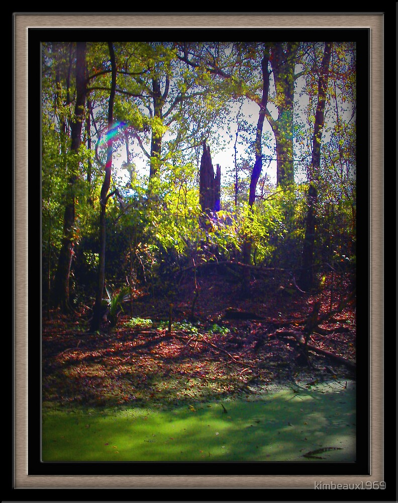 This was taken in the Bayou of South Louisiana by kimbeaux1969