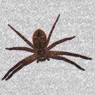 My Pet Spider by Toradellin