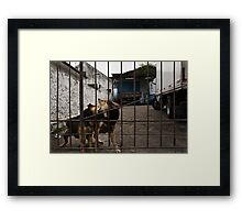 The Urban Way #7 - Pets Framed Print