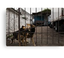 The Urban Way #7 - Pets Canvas Print