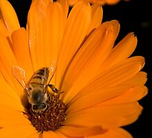 "Just ""Bee"" Yourself...  (Free State, South Africa) by Qnita"