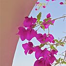 Beautiful Bougainvillea by John Butler