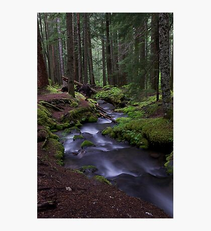 Ramona Falls Trail Photographic Print
